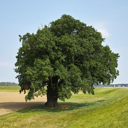عجیبترین درختهای جهان که شما را حیرت زده میکنند