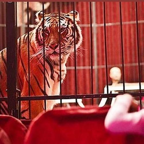 (فیلم) عکس العمل دیدنی حیوانات سیرک پس از رها شدن در طبیعت