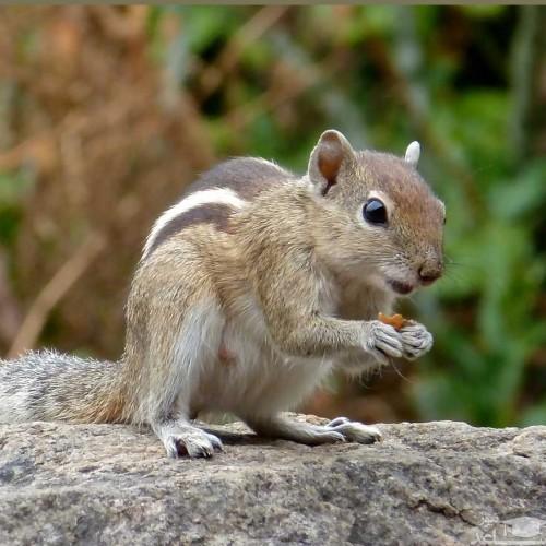 عکسی دیدنی از سنجاب پس از دو ساعت شکار شد
