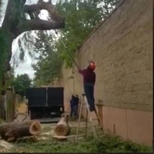 (فیلم) برخورد دلخراش درخت با سر یک مرد