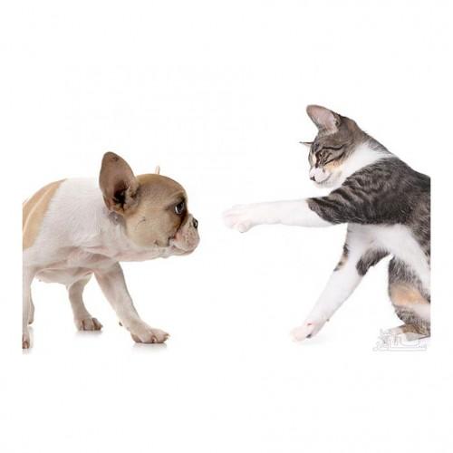 چگونه بین سگ و گربه خود رابطه خوبی برقرار کنیم؟