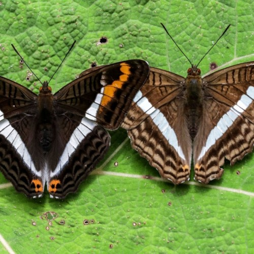 Colombia's Incredible Variety of Butterflies