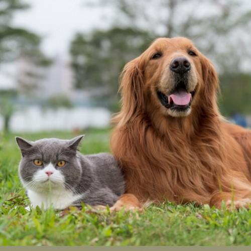 دلائل ایجاد تومور در پستان سگ و گربه و روش های درمان