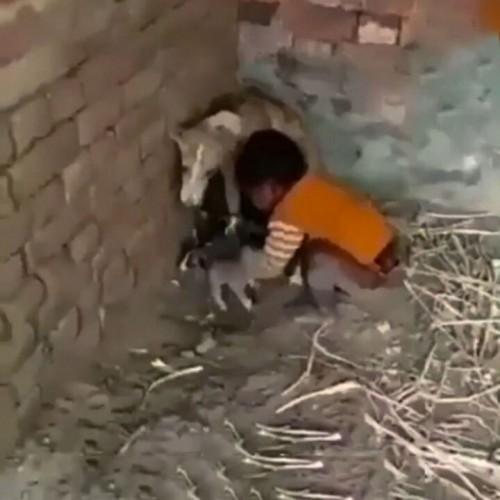 (فیلم) درگیری یک سگ با کودک بر سر تولههایش
