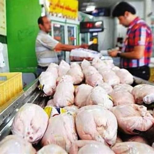 ۱۰درصد گرانی مرغ مساله بزرگی نیست!