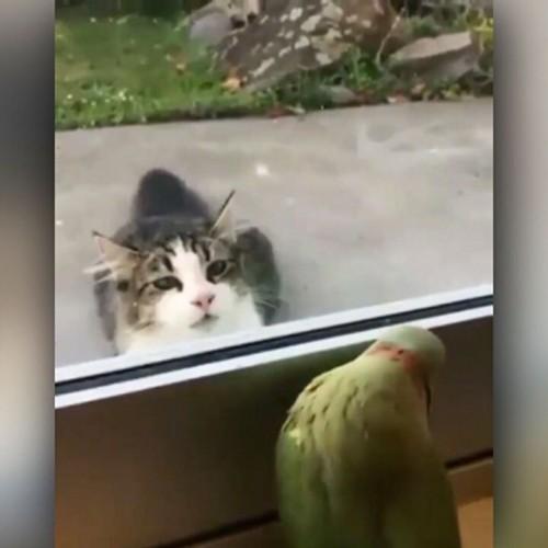 (فیلم) دست انداختن یک گربه گرسنه توسط طوطی بازیگوش