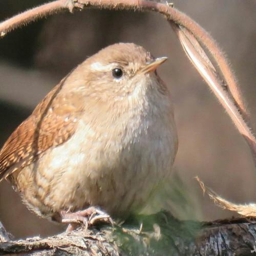 (عکس) استراحت پرنده در گلبرک