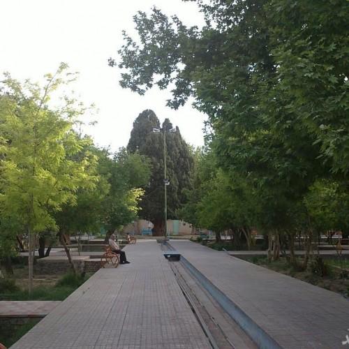 (عکس) درختی زیبا در ایران که مارکوپولو از آن دیدن کرد
