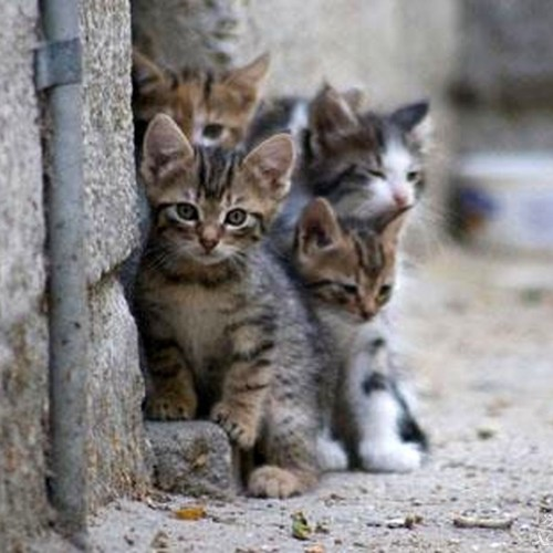 (عکس) دوئل گربه ها بر سر شکار