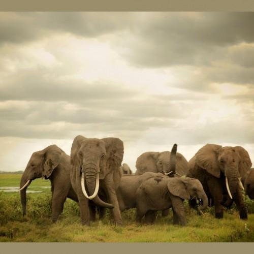 (عکس) خواب دسته جمعی فیلها