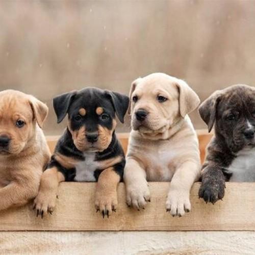 (عکس) کوچک ترین سگ جهان کمی بزرگتر از قوطی نوشابه