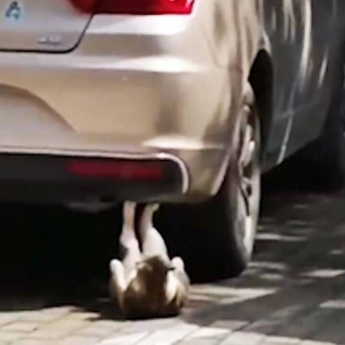 (فیلم) اجرای حرکت دراز و نشست توسط گربه ورزشکار