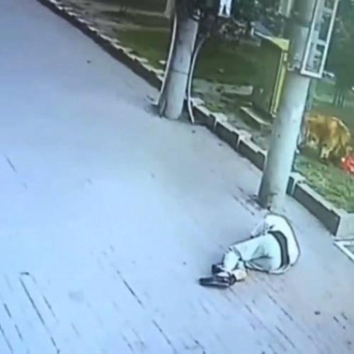 (فیلم) بیهوش شدن یک مرد پس از سقوط گربه از آپارتمان