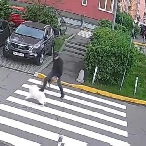 (فیلم) دعوای مالکان دو سگ پس از درگیری حیوانات