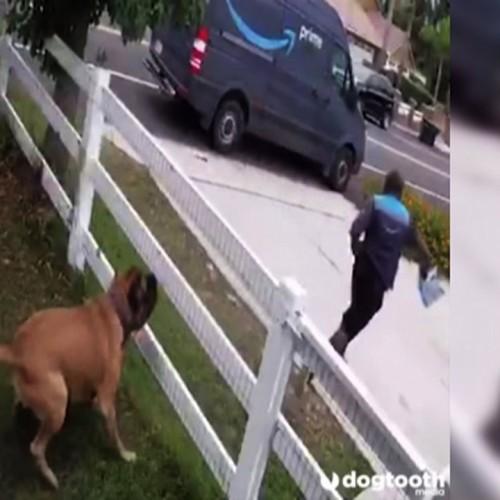 (فیلم) فرار دیدنی یک مرد از دست سگ خانگی