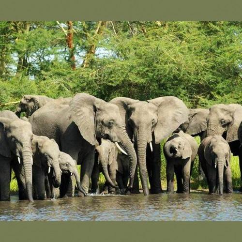 (فیلم) حمله کروکدیل به خرطوم یک فیل!