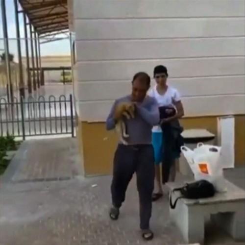 (فیلم) نجات جالب یک گربه توسط دو مرد