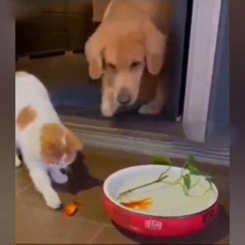 (فیلم) نجات ماهی توسط یک سگ مهربان