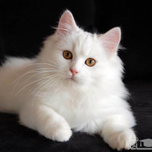 (فیلم) نجات سریع کودک از مرگ توسط گربه خانگی!