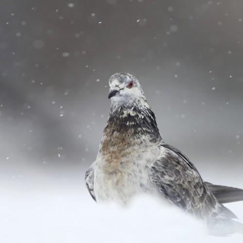(فیلم) پرندهای که هر روز روی پنجره خانهای مینشیند تا صاحب خانه با سشوار گرمش کند
