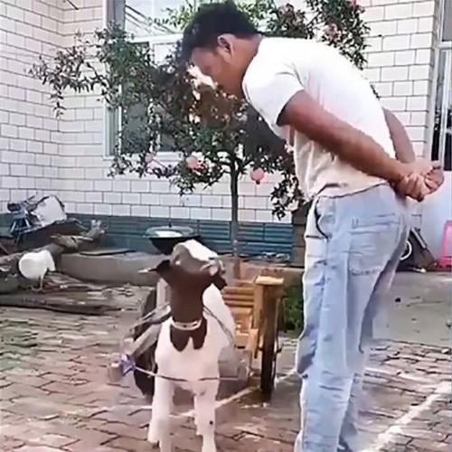 (فیلم) تقلید جالب بزغاله باهوش از صاحبش