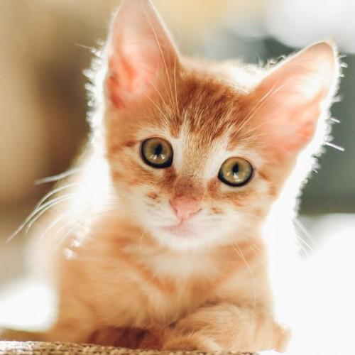 (فیلم) ترس جالب یک موش از گربه