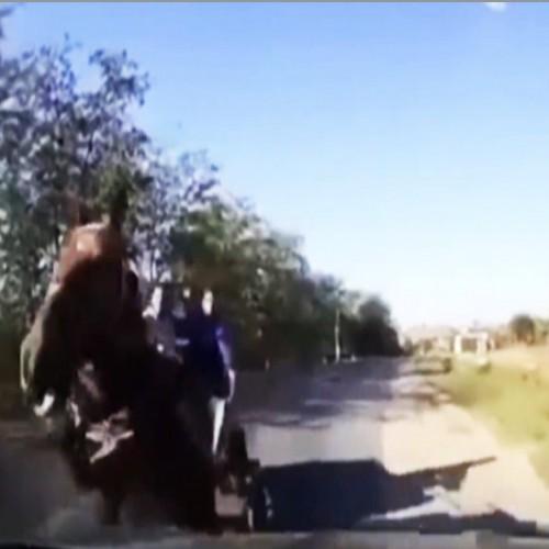 (فیلم) تصادف خودرو با اسب رم کرده در خیابان