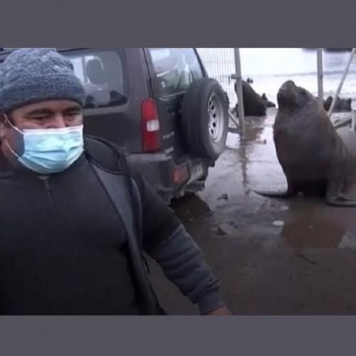 (فیلم) ورود غیرمنتظره شیر دریایی به گزارش زنده تلویزیونی!
