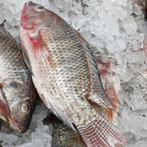 فیلمی عجیب از زنده شدن یک ماهی منجمد!