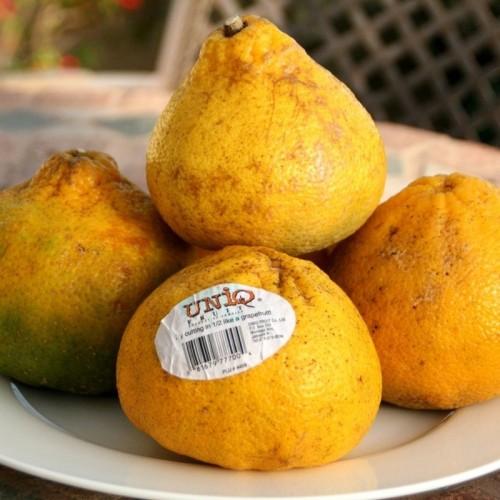 فواید فوق العاده میوه اوگلی