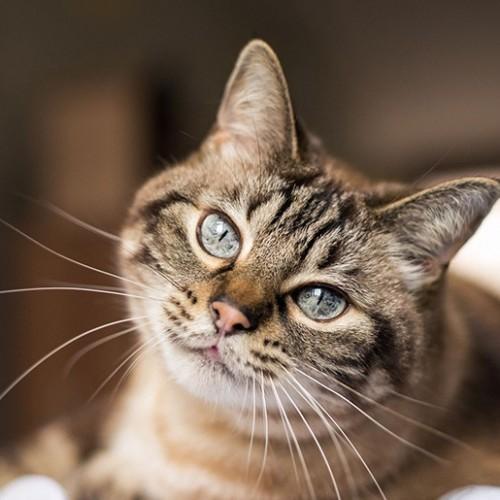 همه چیز درباره بیماری توكسوپلاسمادر گربه ها