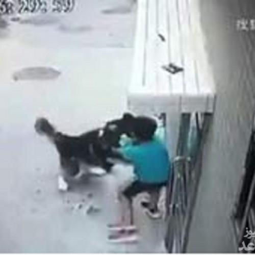 حمله سگ هاسکی به پسربچه ۶ ساله در خیابان