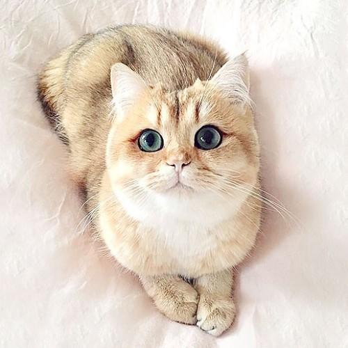کسل و بی حوصله بودن گربه را چگونه رفع کنیم؟