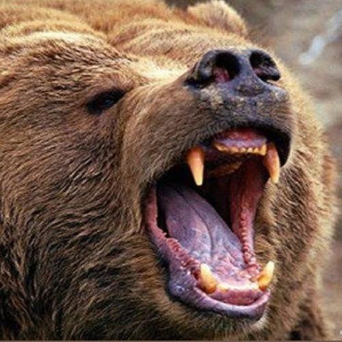 خرس سارق که فقط گرانترین عسل دنیا را میخورد!