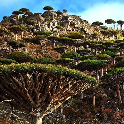 کشف درخت عجیبی که برای زنان وسلیه آرایشی تولید می کند