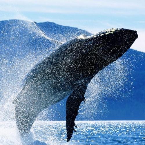 لاشه  عجیب نهنگ ۱۳ متری در جنوب گواتمالا