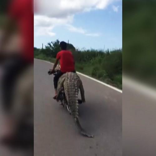 (فیلم) موتورسواری با کروکودیل!