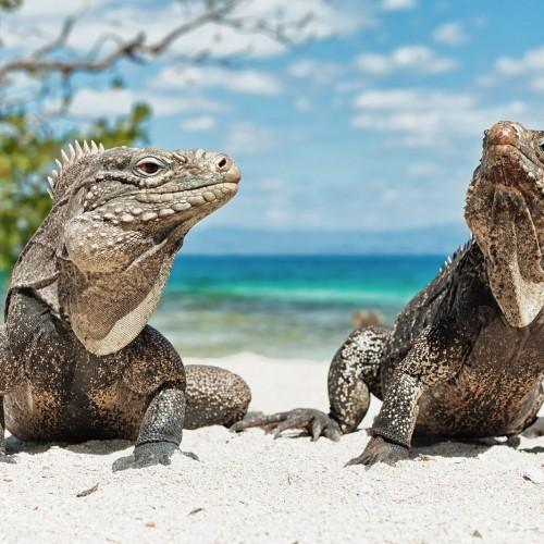 نبرد دو ساعته دو تمساح در زمین گلف!