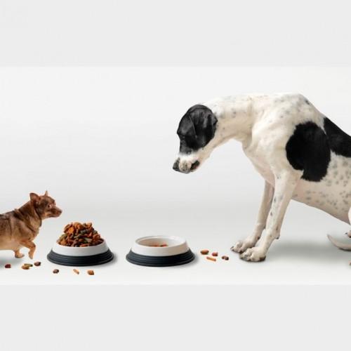نکاتی درباره تغذیه سگ و تولهاش