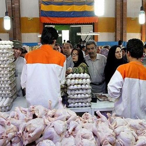 قیمت مرغ این هفته کاهش مییابد
