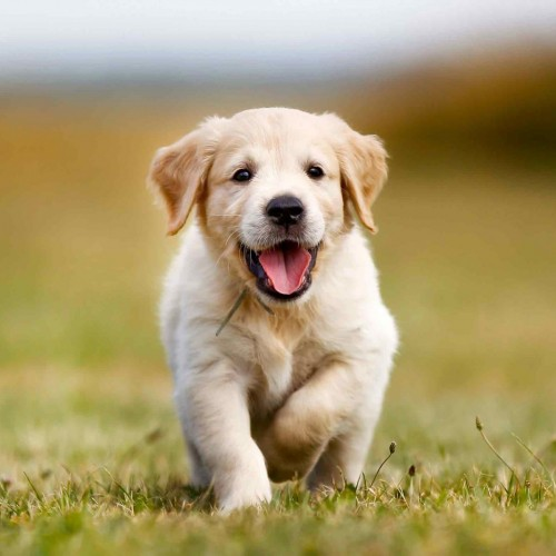 تولد توله سگی با رنگ موی سبز