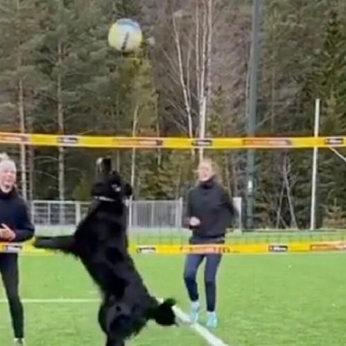 ویدئوی جالب از سگ والیبالیست همه را شگفتزده کرد!