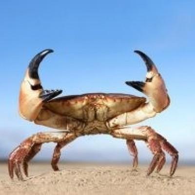 دیدن خرچنگ در خواب چه تعبیری دارد؟  /تعبیر خواب خرچنگ