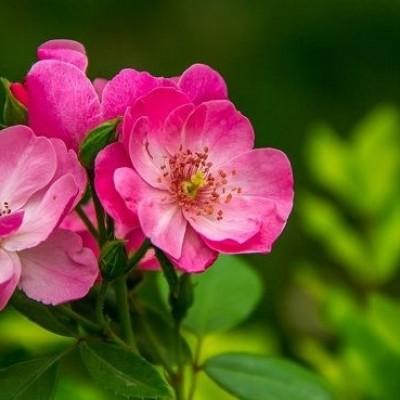 دیدن گل در خواب چه تعبیری دارد؟ / تعبیر خواب گل