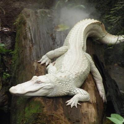 دیدن تمساح (کروکودیل) در خواب چه تعبیری دارد؟ / تعبیر خواب تمساح