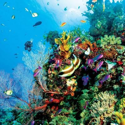دیدن مرجان در خواب چه تعبیری دارد ؟ / تعبیر خواب مرجان