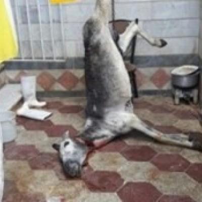 فروش گوشت الاغ به جای گوشت برزیلی !