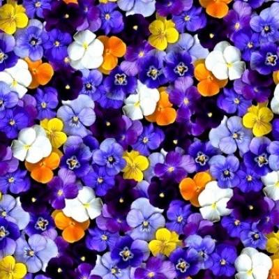 دیدن گل بنفشه در خواب چه تعبیری دارد؟ / تعبیر خواب گل بنفشه