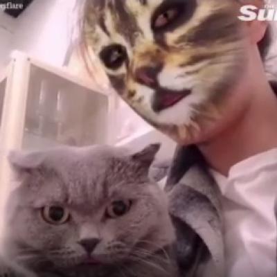 (فیلم) ویدئوی استثنایی سان از دست انداختن گربهها با استفاده از نرم افزار تغییر شکل!