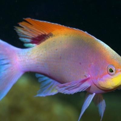 دیدن ماهی در خواب چه تعبیری دارد؟ / تعبیر خواب ماهی